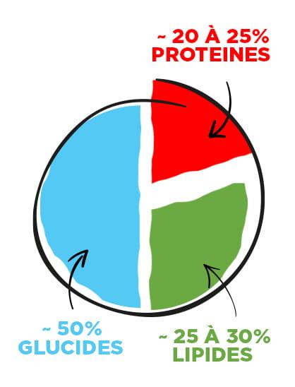 Répartition entre les glucides, lipides et protéines dans l'organisme
