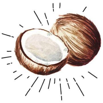 Les Coques de coco