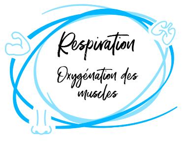La respiration : nécessaire à l'oxygénation des muscles