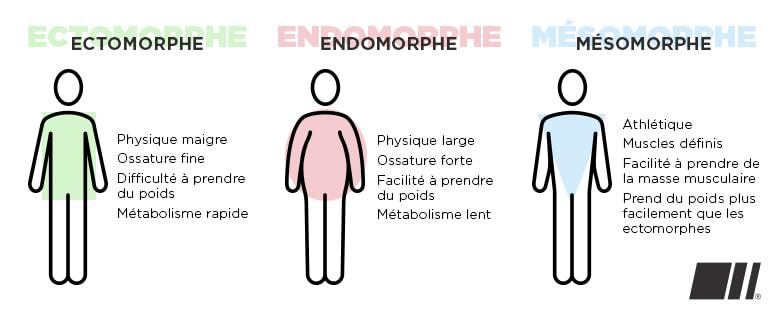 Morphologies Ectomorphe, Endomorphe et Mésomorphe - FitnessBoutique