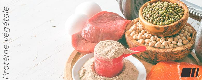Prtoéine végétale ou Protéine Animale
