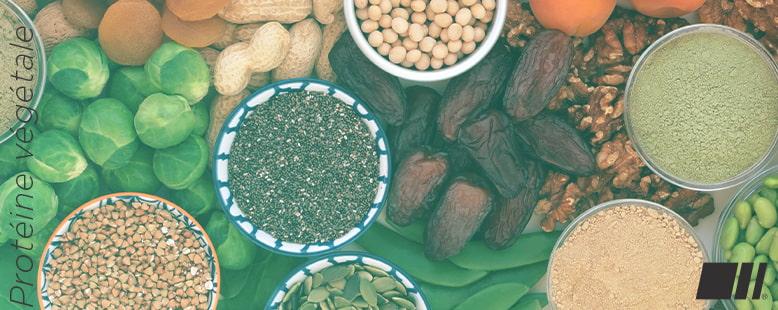 Proteines végétal