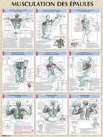 Librairie - Musique Vigot Poster Musculation des Epaules