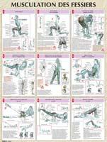 Librairie - Musique Poster Musculation des Fessiers Vigot - Fitnessboutique