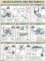 Librairie - Musique Poster Musculation des Pectoraux Vigot - Fitnessboutique